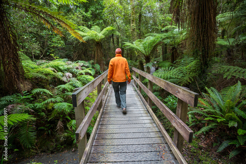 Photo New Zealand forest