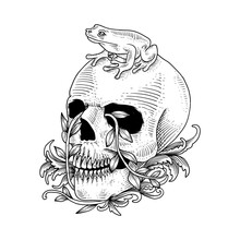 Hand Drawn Skull And Frog, Can Be Used For Tattoo, T Shirt Design, Poster, Banner, Background, Decoration.