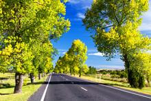 Winding Road Through Farmlands...