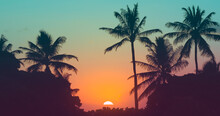 Tropical Sunset Through The Pa...