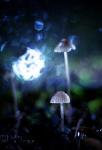 Mushrooms In The Background Of...