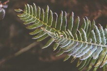 Closeup Of Fern Leaves Covered...