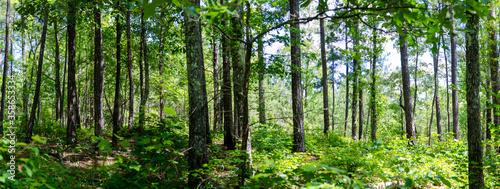Valokuvatapetti panoramic view of section of talladega national forest, cheaha mountain, alabama