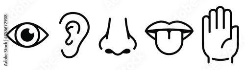 Five senses of human nervous system vector illustration Fototapete