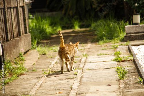 長崎の野良猫_04 Tapéta, Fotótapéta