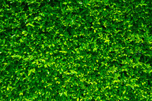 Green Tiny Leafs Wall Nature B...