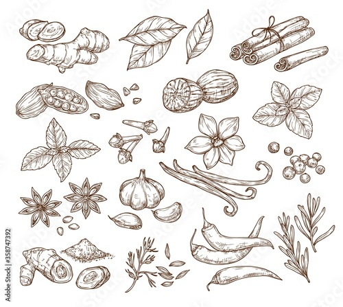 Vector sketch illustration of spices and herbs. Isolated on a white background.