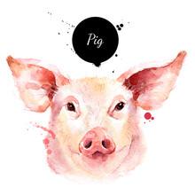 Watercolor Hand Drawn Pig Head...