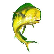 Mahi Mahi Or Dolphin Fish On Isolate. Mahi Mahi Yellow Fish Realistic Illustration.