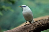 ptak bialy
