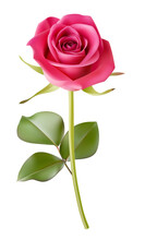 Decorative Realistic Pink Rose With Green Leaves Isolated On White. Vector Illustration