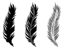 Set Of  Feathers. Сollection ...