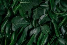 Creative Tropical Green Leaves...