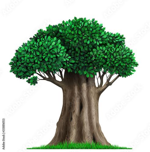 Photo Realistic fairy old oak tree in vector