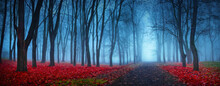 Beautiful Mystical Forest In B...