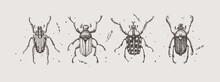 Large Set Of Hand-drawn Beetle...