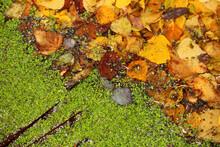Beautiful Autumn Background We...
