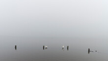 Two Geese At Abcoudermeer, The...