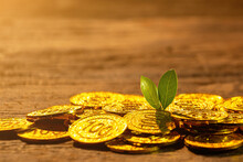 Golden Coins With Young Plant....