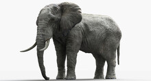 Giant Elephant. 3D Render Of A...