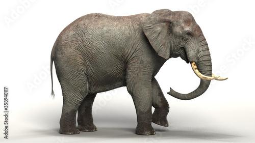 Fényképezés giant elephant