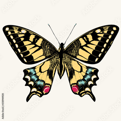 Fotografie, Obraz Beautiful swallowtail butterfly vector illustration isolated on white