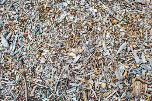 Fényképezés Dry wooden sawdust / scobs and wood chips on a ground