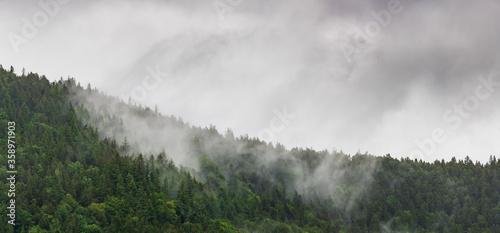 Fototapeta Les crêtes vosgiennes sous la pluie. Quand la forêt s'évapore...