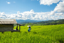 Green Rice Field With Thai Tra...