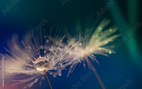 Abstract blurred nature background dandelion seeds parachute Fototapet