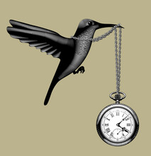 Engraved Vintage Drawing Of A Flying Hummingbird With A Retro Pocket Watch