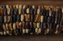 Purple Corn Or Flint Corn Is A...
