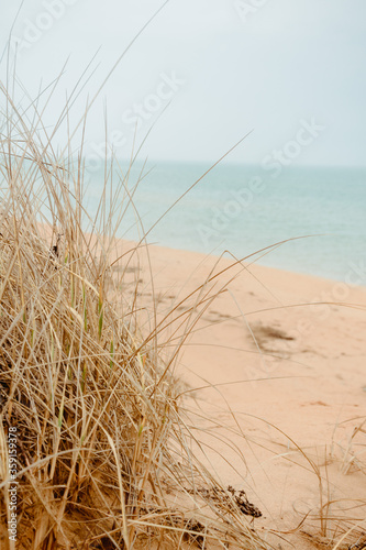 Beach grass on the sand in pastel colors