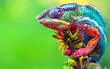 Beautiful and multi coloured chameleon in close-up