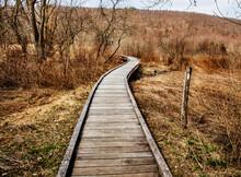 Pathway Through The Appalachian Trail In Autumn, New York
