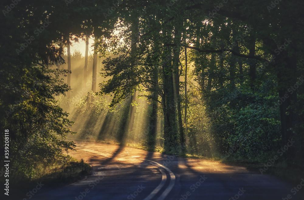Fototapeta Wschód słońca w lesie