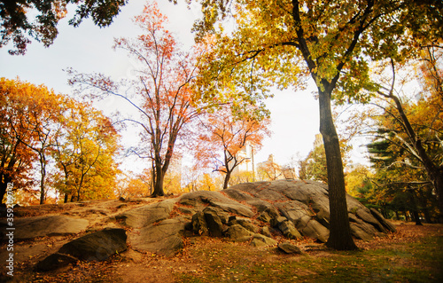 Autumn in Central Park, New York City  - 359209742