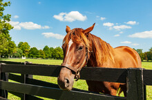Horse Looking Over A Fence