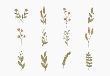 Tiny Simple Botanical Illustra...