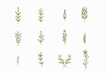 Tiny Simple Botanical Illustra...