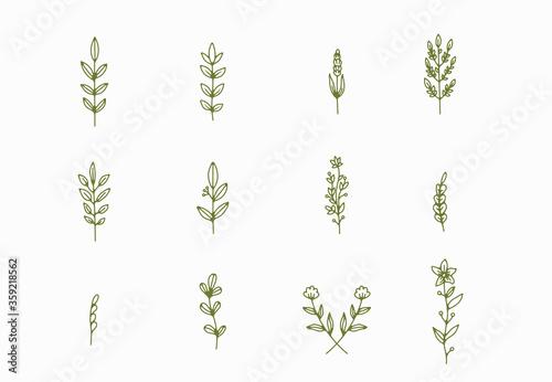 Leinwand Poster tiny simple botanical illustrations, line artwork, minimal design elements