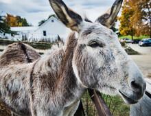 Close Up Of A Donkey On A Farm