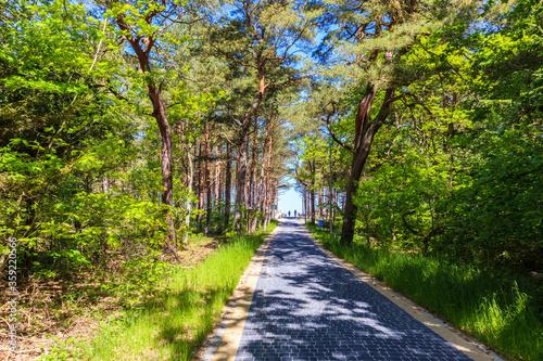 Obraz Entrance from forest to beautiful beach near Kolobrzeg, Baltic Sea coast, Poland - fototapety do salonu