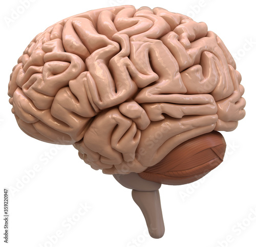 Photo 3D Rendered illustration of a brain