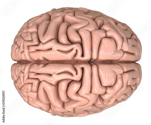3D Rendered illustration of a brain Wallpaper Mural