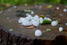 Large Hail On A Tree Stump