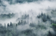 Foggy Forest In The Mountains....