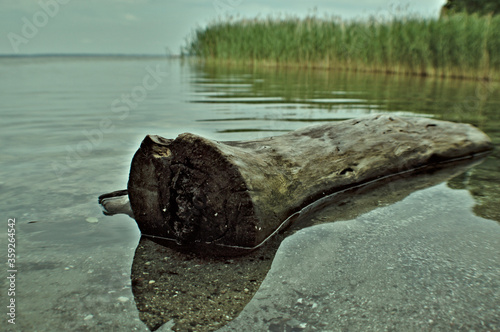Obraz Belka drzewa na jeziorze.  - fototapety do salonu