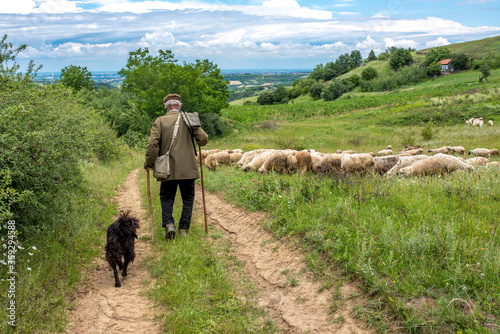 Fotografia, Obraz Old shepherd with dog and flock of sheep in the meadow with beautiful clouds in