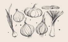 Hand-drawn Large Set Of Onions...